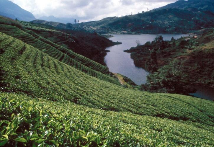 sri-lanka-wikipedia_1421316532_725x725